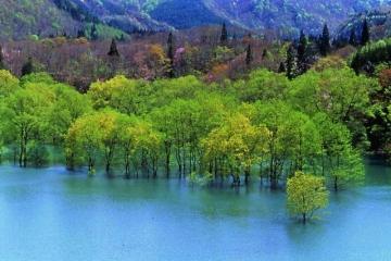 日本白神山地 奥入濑溪流两大自然探索胜地5日当地游 野去自然旅行