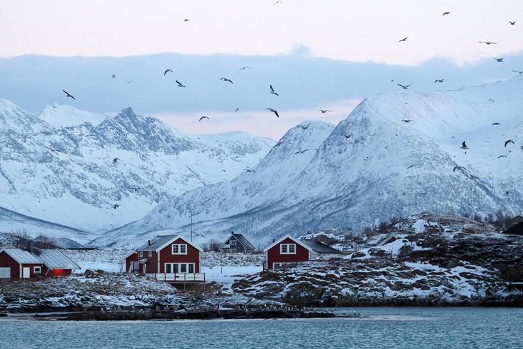 挪威北部峡湾冬季观鲸观北极光 (8).jpg