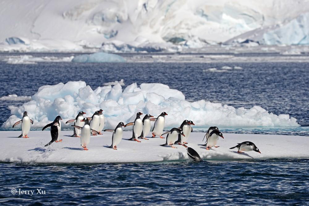 野生动物-企鹅 (94).jpg